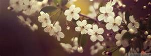 nature, flower, fb, timeline, cover » AdorableTab.com