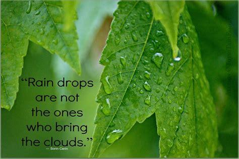raindrops quotes quotesgram
