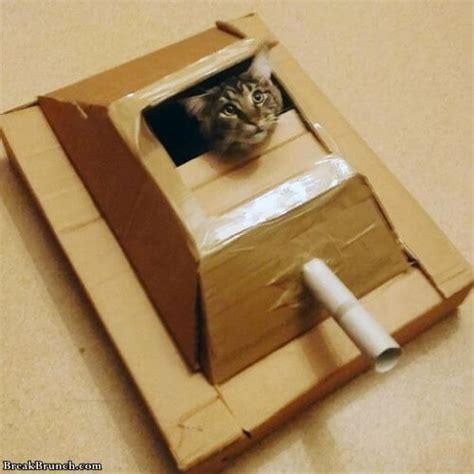 Cute cats in cardboard tanks (16 pics)   BreakBrunch