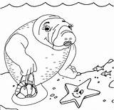 Manatee Coloringpagesfortoddlers sketch template