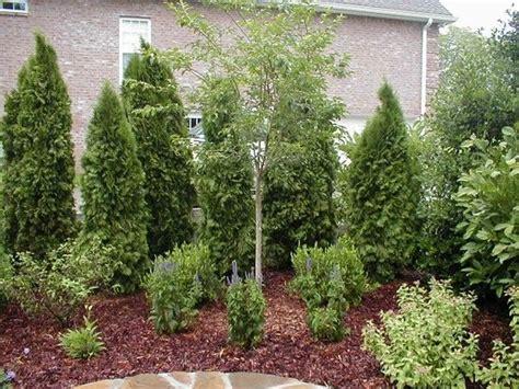 privacy landscaping plants another backyard privacy idea backyard ideas pinterest gardens backyards and by