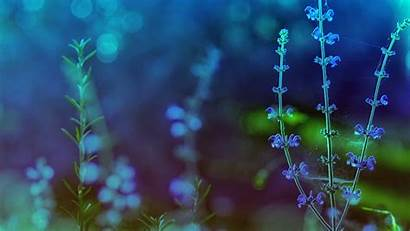 Theme Themes Desktop Wallpapers Spring Flowers Backgrounds