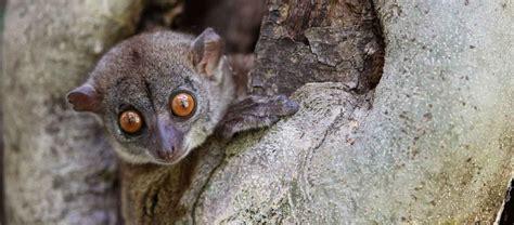 Madagascar Safari Apex Expeditions