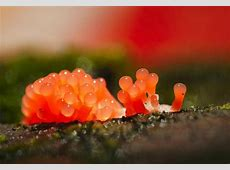 神奇:显微镜下的细菌竟是如此美妙!组图_新闻频道_中华网