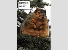Dickes Eichhörnchen Bild lustichde