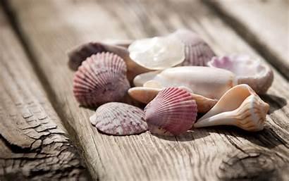Shells Wallpapers Seashell Sea Desktop Shell Seashells
