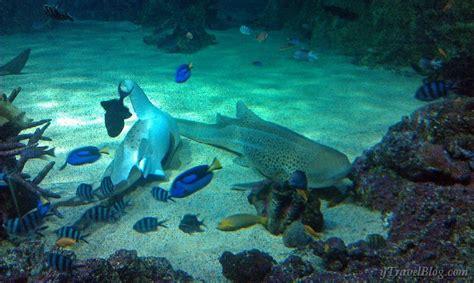 sea sydney aquarium images for official sea sydney aquarium image search results