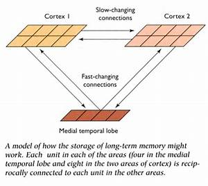 Notes: Cognition 2 - Memory
