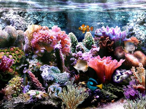 decor de fond aquarium aquarium wallpaper for windows 7 wallpapersafari