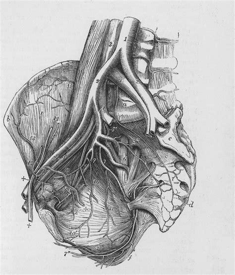 study humans  higher heart disease risk