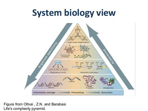 Synthetic Biology Wikipedia  Autos Post