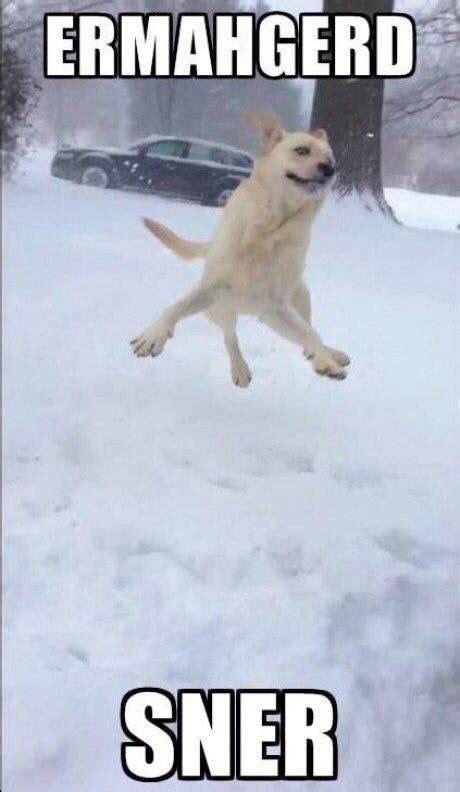 Christmas Animal Meme - snow dog christmas meme funny christmas memes pinterest christmas meme snow dogs and meme