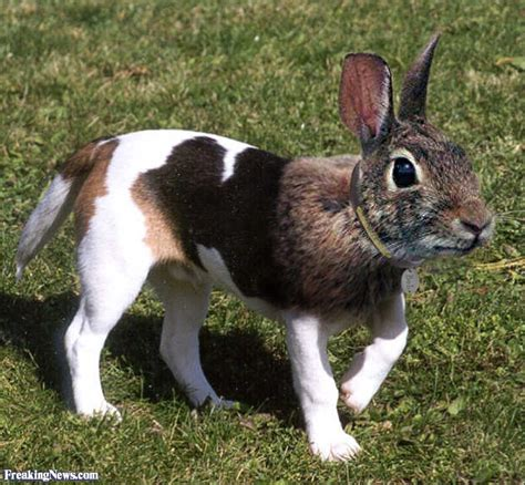 hybrid animals pictures freaking news