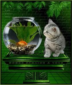 Bonne Série à Voir : bonne semaine le chat et le poisson dans le bocal gifs pinterest les poissons le bocal ~ Medecine-chirurgie-esthetiques.com Avis de Voitures
