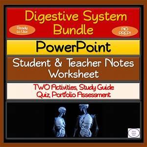 Digestive System Bundle  No Prep  Lesson  2 Activities