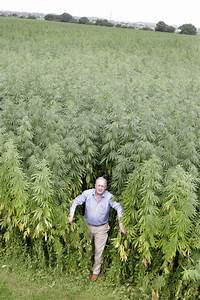 Growing hemp is about to be legal for the first time in nearly a century…