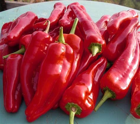 sweet pepper capsicum a kitchen garden notebook