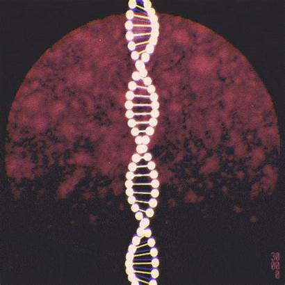 Dna Helix Biology Double Animation Gifs Molecular