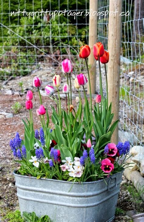 planting flowering bulbs in containers