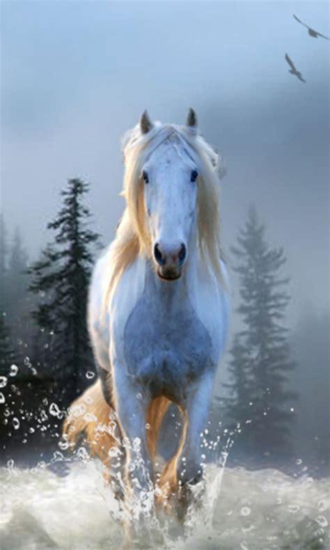 horse wallpapers app apk   android getjar