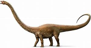 Diplodocus Diplodocus Facts Dk Find Out
