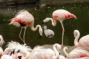 Think Pink – Flamingo Dads | Wild View