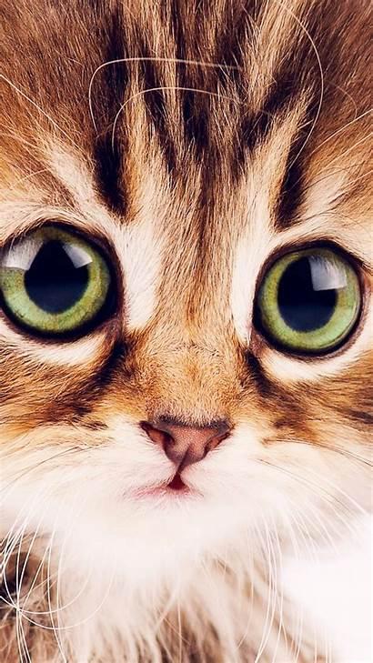 Funny 4k Animals Kitten Pets Wallpapers Wallpapershome