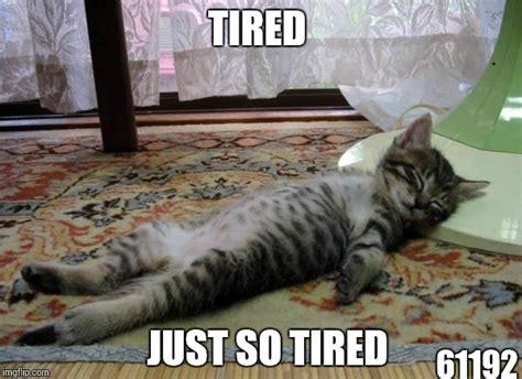Tired Cat Meme - funny sleepin cat imgflip