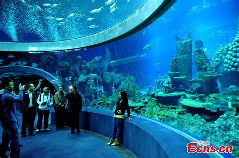 le plus grand aquarium du monde est le chimelong kingdom r 233 cifal news