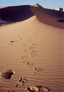 Footprints In The Sand Clipart - Clipart Suggest
