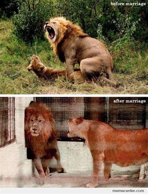 Lion Sex Meme - before marriage after marriage by ben meme center