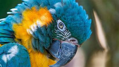 Macaw Yellow 5k Wallpapers Bird Gold Animals