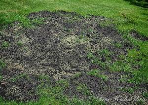 Totally Repair Dead Grass Spots Damaged By Dog Urine In 3