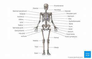 Skeletal System Quizzes  Learn Bone Anatomy Fast