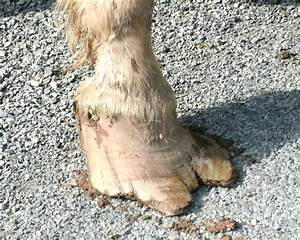 Summer And The Importance Of Regular Hoof Care