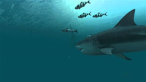 Animated Shark Wallpaper - sharks 3d live wallpaper and screensaver