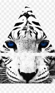 Tiger's Curse White Tiger Desktop Wallpaper Felidae Zoo ...