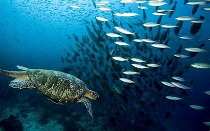 Ocean Marine Wallpapers Fish Desktop Animals Animal