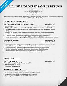 Curriculum vitae wildlife biologist curriculum vitae for Biology resume template
