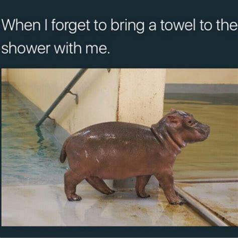 Baby Hippo Meme - 15 best hilarious hippo memes images on pinterest hilarious hilarious stuff and funny animals