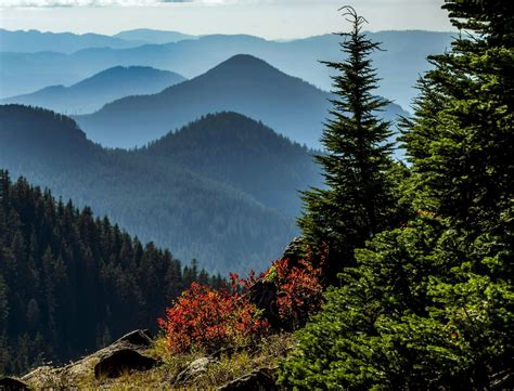 Willamette National Forest to reopen using a 'phased ...