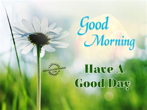 Good Morning Wishes  Good Morning Pictures