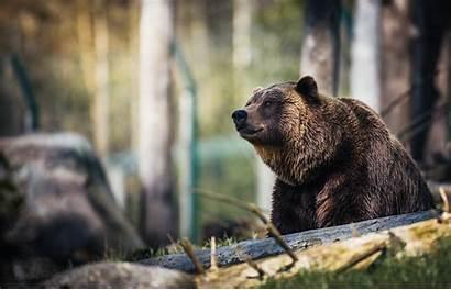 Bear Grizzly Trump Donald Jr Alaskan Hunt