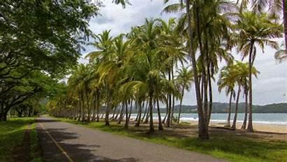 Tree Palm Kerala Trees Coconut Dreams Rica