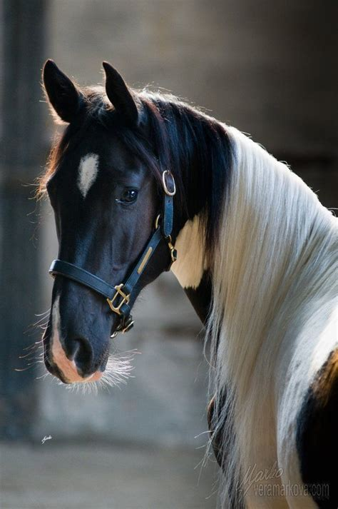 how do horses live how do horses live best horse 2017