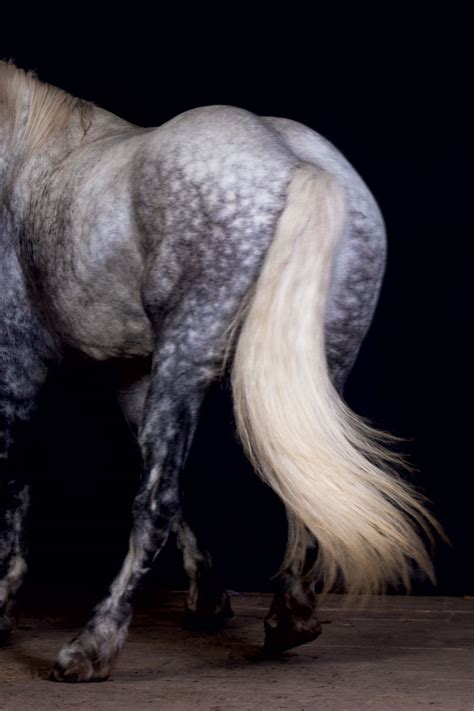 harness  power  draft horses modern farmer
