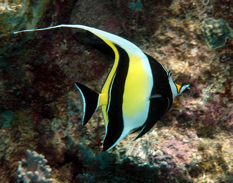 colorful saltwater fish top 10 most beautiful and colorful fish