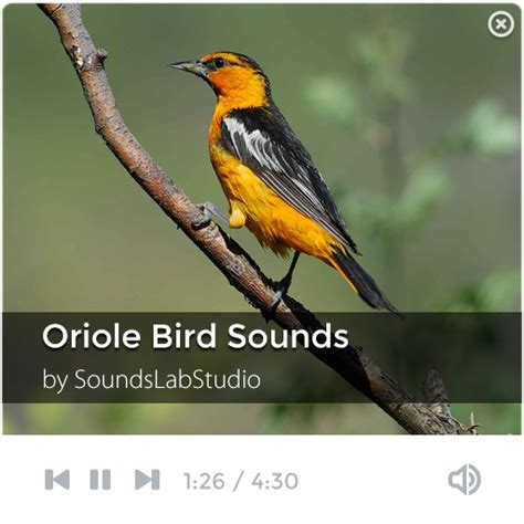 oriole bird sounds android apps on google play