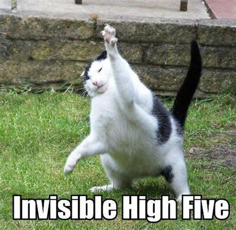 High Five Meme - cats and invisible objects 25 pics