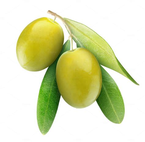 Two green olives on a branch  Food & Drink Photos on